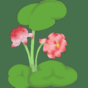 荷花荷叶植物插画