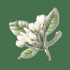 带叶子的白色花朵