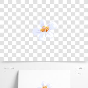 白色植物花朵元素