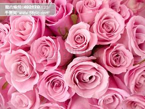 玫瑰背景图片下载