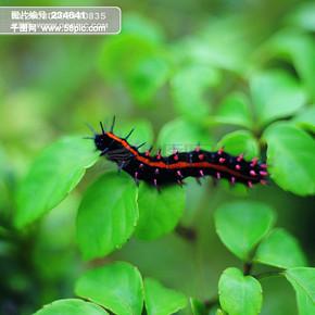 昆虫物语 动物与植物的和谐相处 昆虫与植物和谐相处 蝴蝶