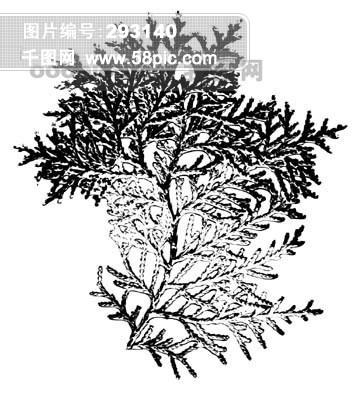 手绘叶子插画黑白