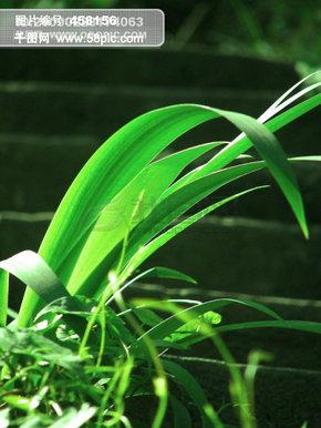 山水风景 绿叶 草地 绿草 小草