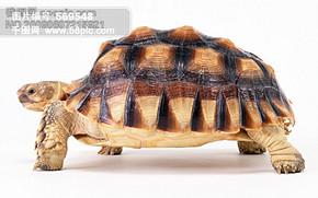 懒人图库乌龟