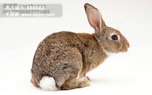 懒人图库兔子