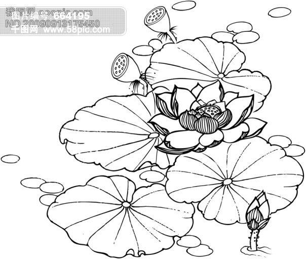 佛手莲花手绘图