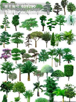 效果图素材 植物 素材 效果图 环境设计 园林设计